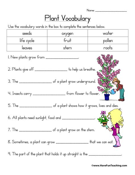 cycle of a plant worksheets teaching