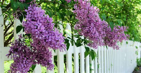 Garten Im Maerz Das Ist Jetzt Zu Tun by Garten Im April Das Ist Jetzt Zu Tun Das Haus
