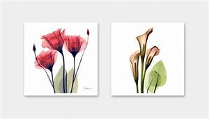 Exquisite Floral X-Ray Art Prints By Albert Koetsier