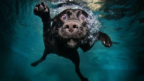 wallpaper dog   wallpaper puppy black underwater