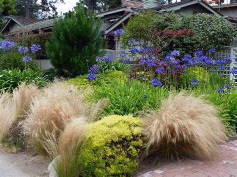 landscaping with agapanthus agapanthus