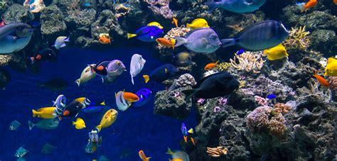 best water tank blue planet aquarium orphek