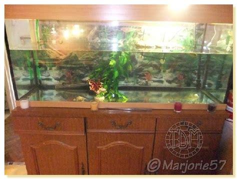 aquarium tortue de floride exemples d aquariums pour tortues aquatiques