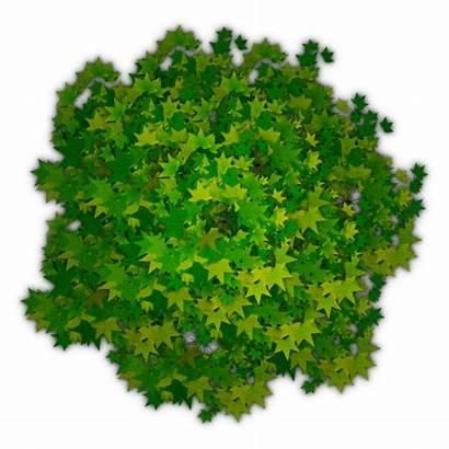 Tree Trees Photoshop Plans Plants Plan Forums