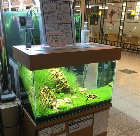 Aquascape Store by Visited Aquascape Local Fish Stores In Asia Pet Zone