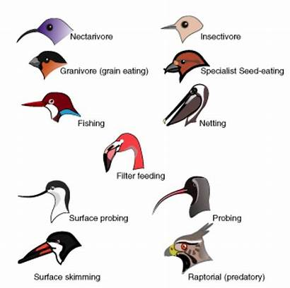 Ecology Science Niche Beak Birds Bird Different