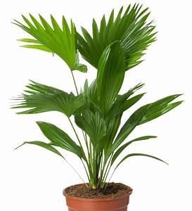 Plantes Exotiques D Intérieur : 20 astuces pour des plantes d 39 int rieur en pleine sant garden ~ Melissatoandfro.com Idées de Décoration