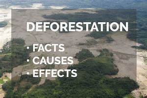 Deforestation  Facts  Causes  U0026 Effects  U2013 Common Issues