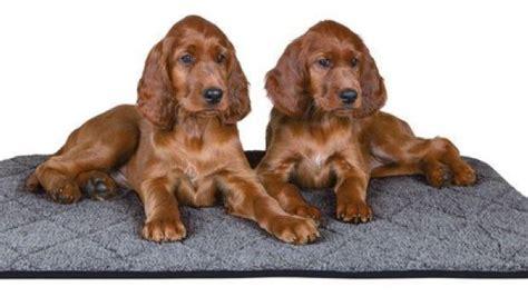 tappeti per cani tappeti per animali