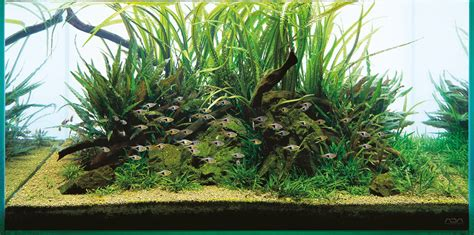 Ada Aquascape by Ada Aqua Soil Malaya And Africana Aquascaping Wiki