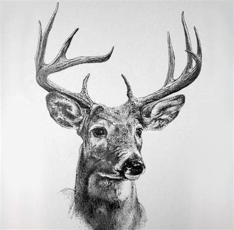 deer drawings designs  premium