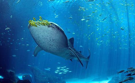 top 7 new largest aquarium in the world morewallpapers