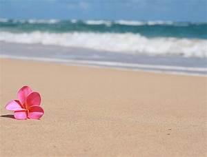 Beautiful Hawaiian Flower Garden Wallpaper - WallpaperSafari