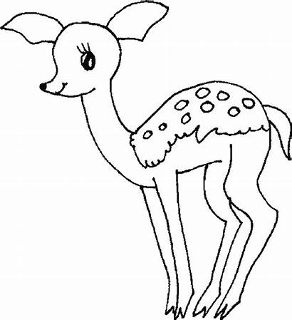 Deer Coloring Pages Printable Colouring Clipart Mother