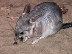 Image Gallery Marsupial Mammals