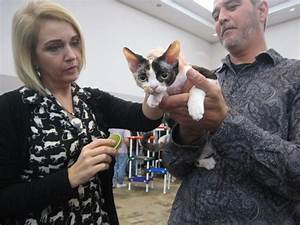 Humble Civic Center welcomes thousands of cats, cat lovers ...