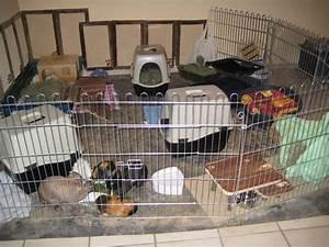 Kaninchengehege Bauen Innen : meerschweinchen haltung und besch ftigung danielas webzoo ~ Frokenaadalensverden.com Haus und Dekorationen