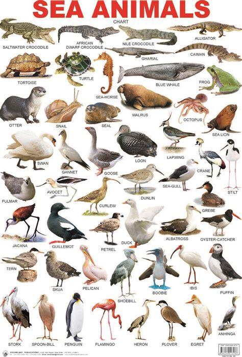 sea animals alaahariri