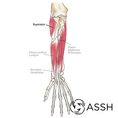 Check out our hands forearm tendon selection for the very best in unique or custom, handmade pieces from our shops. Body Anatomy: Upper Extremity Tendons | The Hand Society