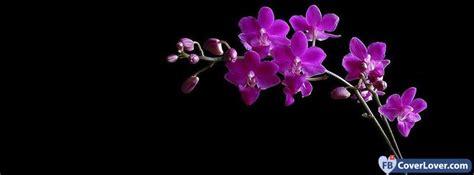 dark pink orchids flowers facebook cover maker