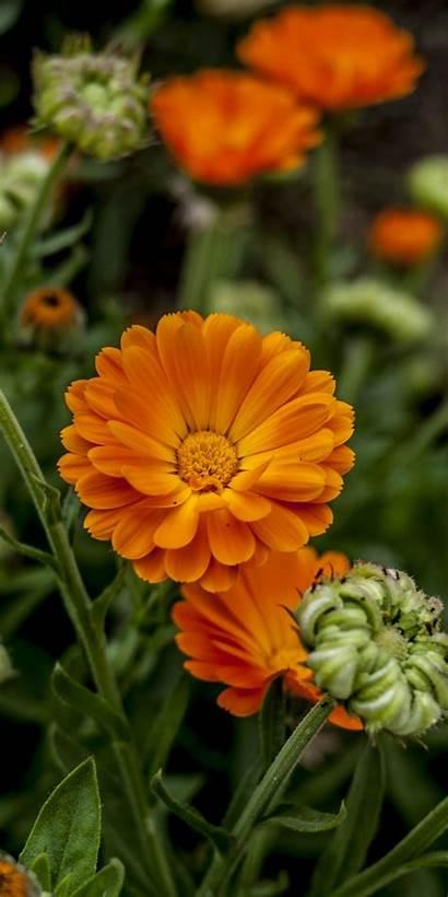 Orange Flower Garden Flowers