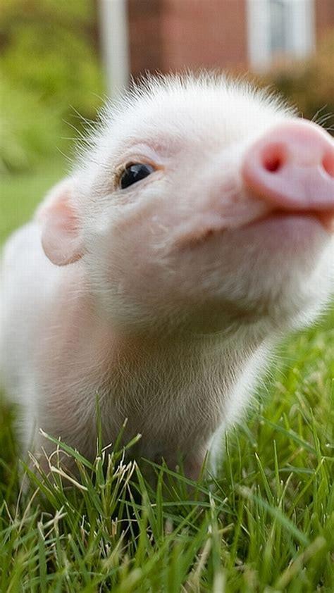Fondos De Pantalla Apple Fondos De Pantalla De Animales Para Iphone