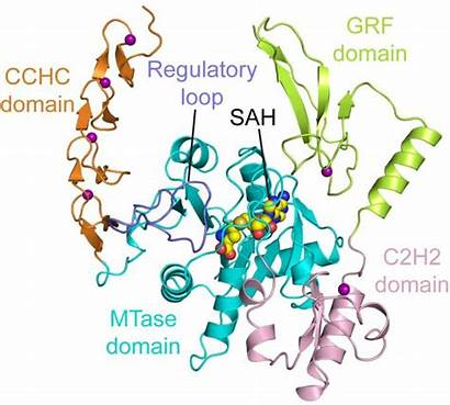 Enzyme Structure Cell Cancer Scientists Rna Crack