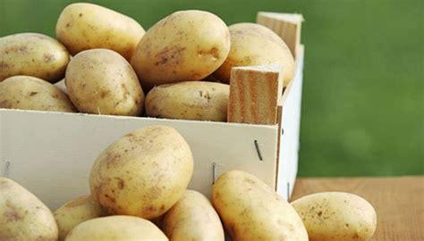 kartoffeln ernten und lagern so macht es richtig