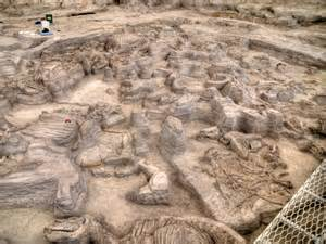 on the open road twelve million years ago