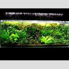 Junglestyle Aquascape Youtube