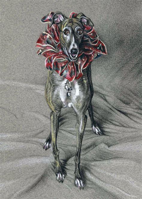 greyhound drawings illust images  pinterest