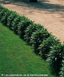 Plante De Bordure : choisir un bambou pour une bordure le magazine gamm vert ~ Preciouscoupons.com Idées de Décoration