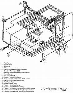 Wiring Harness Efi