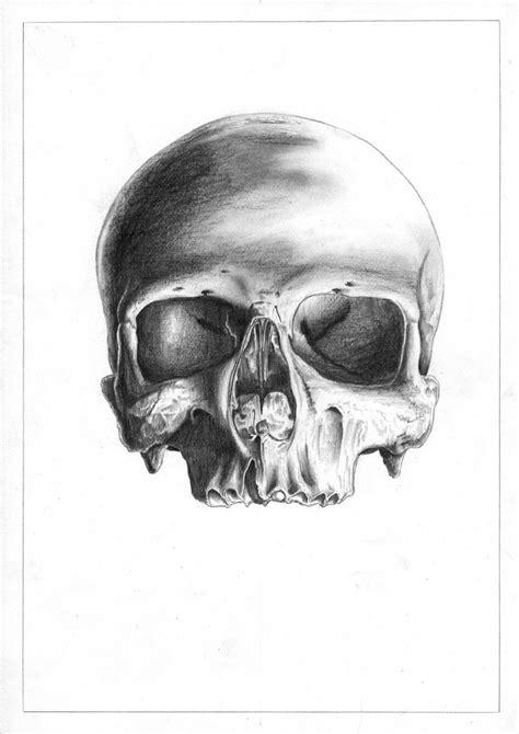Human Skull Drawing