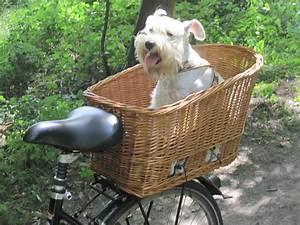 Fahrradkorb Hund Hinten : wer hat erfahrung mit hunde fahrradkorb seite 2 ~ Kayakingforconservation.com Haus und Dekorationen