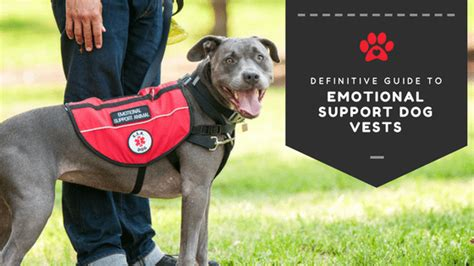 50% Of Dog Owners Don't Know This About Emotional Support