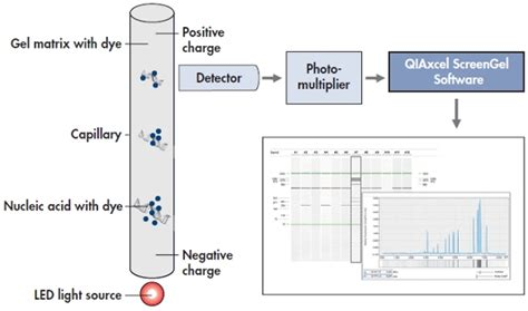 High-Resolution Separation of Nucleic Acid Fragments ...
