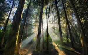 Landscape, Nature, Sun, Rays, Forest, Sunrise, Trees, Mist, Shrubs, Wallpapers, Hd, Desktop, And