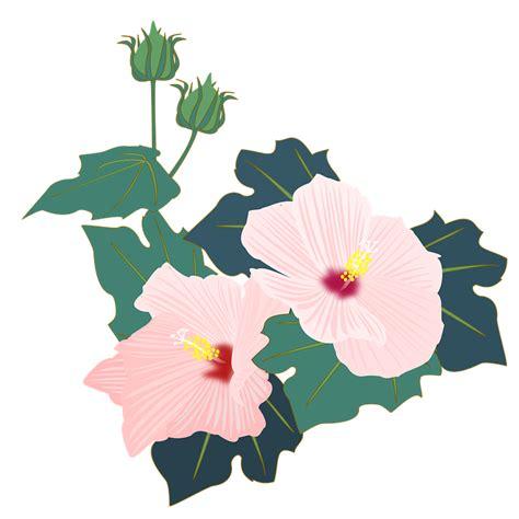 hibiscus furong pink  image  pixabay