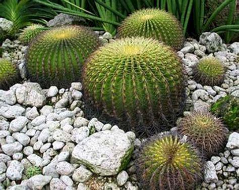 Cactus Plants Garden - DECOREDO
