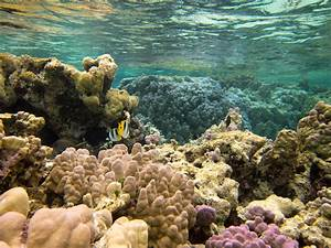 Pics For > Top 10 Most Beautiful Coral Reefs
