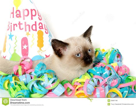 kitten and birthday decorations royalty free