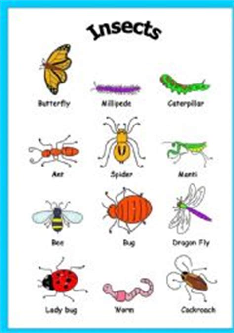 insects esl worksheet  mouna mch