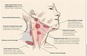 Evaluation Of Neck Masses In Adults -