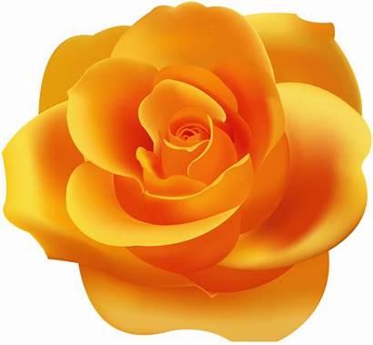 Orange Rose Clip Clipart Roses Transparent Yopriceville