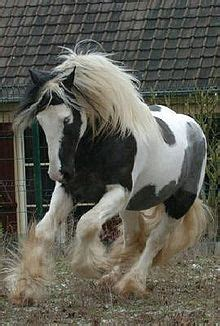 tinker pferd wikipedia
