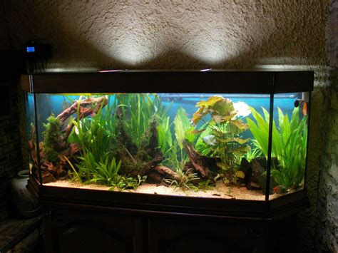 aquarium 500 litres occasion aquarium 500 litres occasion 28 images d 233 marrage d un nouvel aquarium r 233 cifal de 837