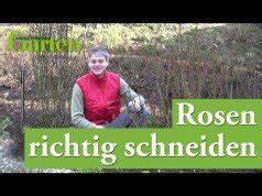 Rosen Düngen Im Frühjahr : rosen im garten 9 tipps f r die pflege ~ Orissabook.com Haus und Dekorationen