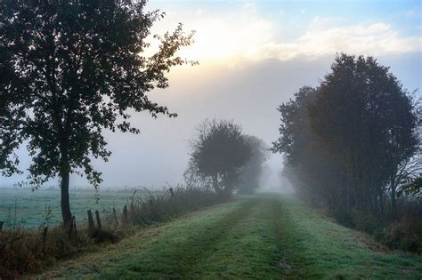 nebel herbst und baeume frueh morgens bei sonnenaufgang