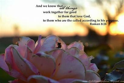 Romans 28 Kjv Scripture Things Together Wallpapers